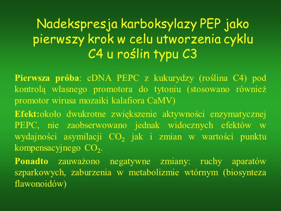 Nadekspresja karboksylazy PEP jako pierwszy krok w celu utworzenia cyklu C4 u roślin typu C3