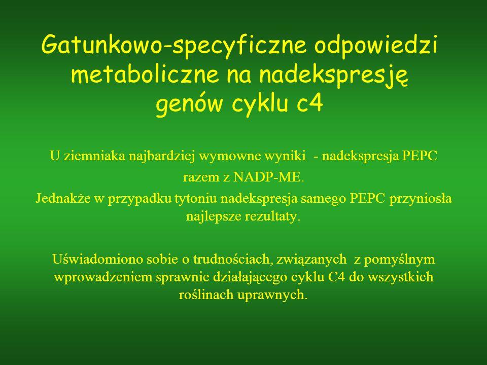 U ziemniaka najbardziej wymowne wyniki - nadekspresja PEPC