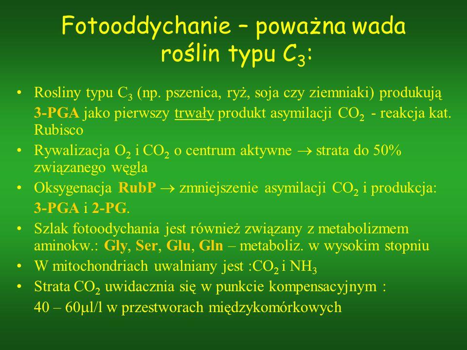 Fotooddychanie – poważna wada roślin typu C3:
