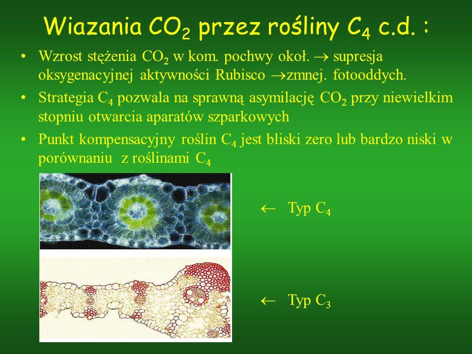 Wiazania CO2 przez rośliny C4 c.d. :