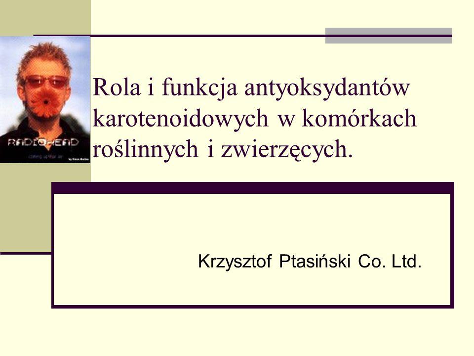 Krzysztof Ptasiński Co. Ltd.
