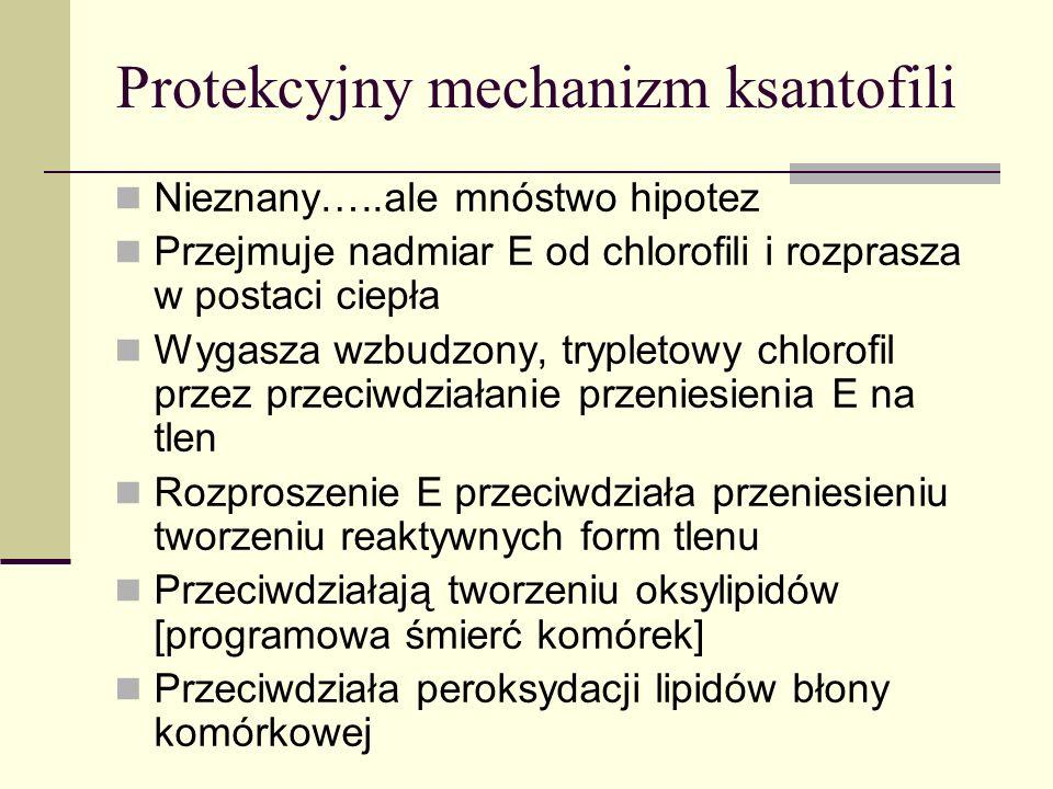Protekcyjny mechanizm ksantofili