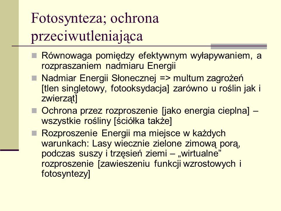 Fotosynteza; ochrona przeciwutleniająca