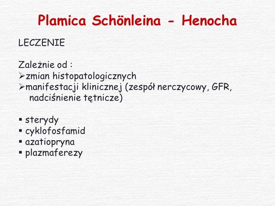 Plamica Schönleina - Henocha
