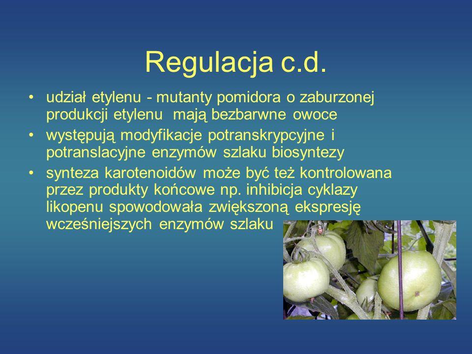 Regulacja c.d. udział etylenu - mutanty pomidora o zaburzonej produkcji etylenu mają bezbarwne owoce.