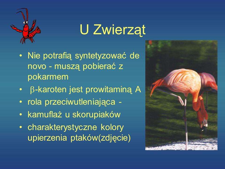 U Zwierząt Nie potrafią syntetyzować de novo - muszą pobierać z pokarmem. b-karoten jest prowitaminą A.