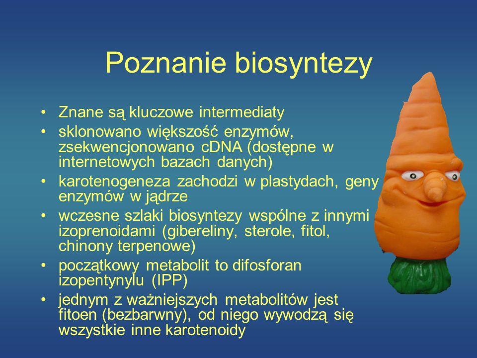 Poznanie biosyntezy Znane są kluczowe intermediaty