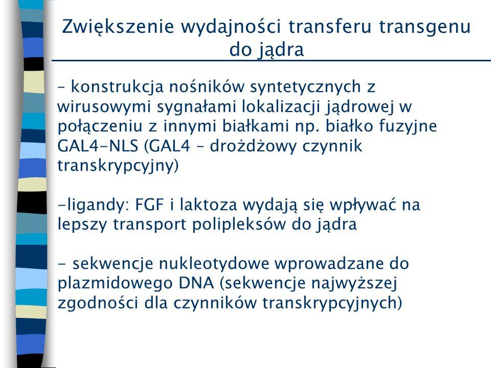 Zwiększenie wydajności transferu transgenu do jądra