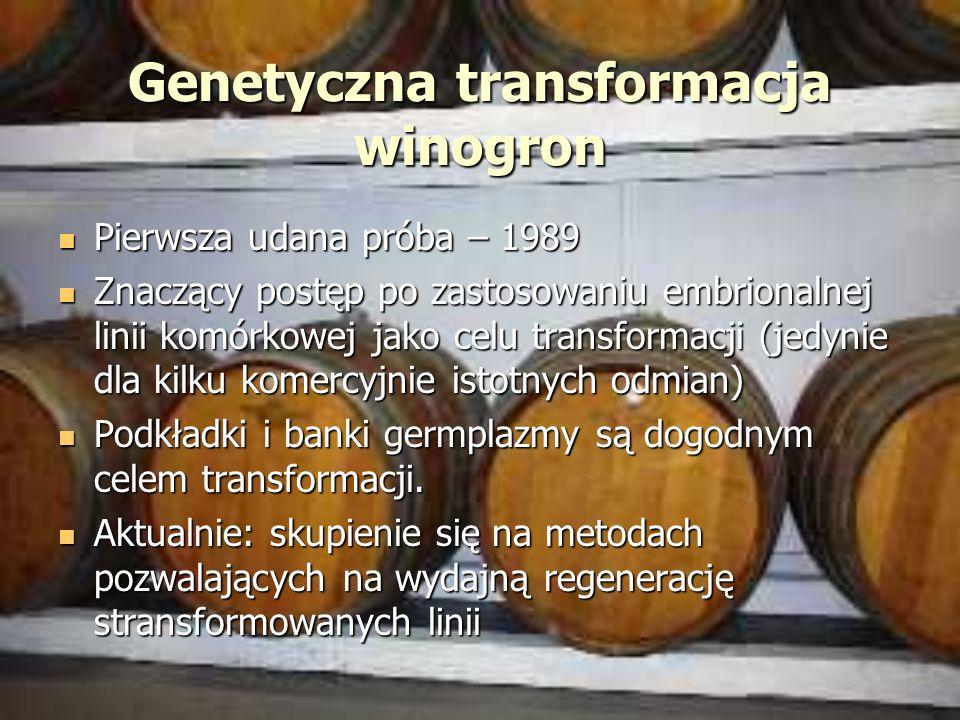 Genetyczna transformacja winogron