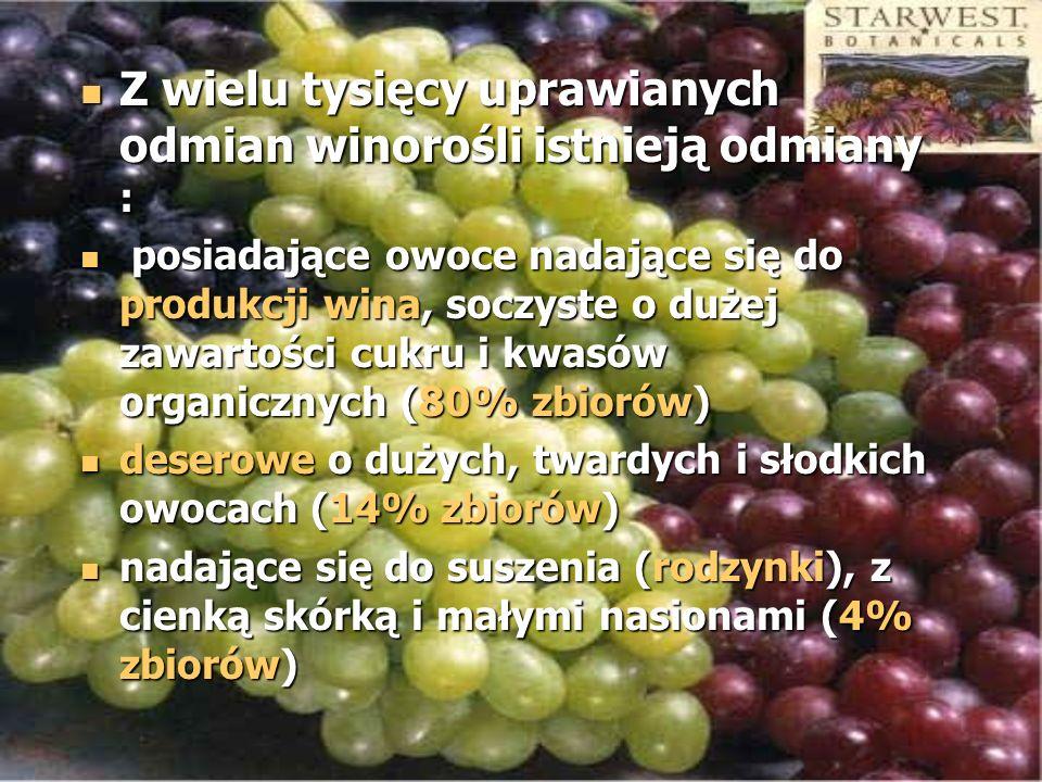 Z wielu tysięcy uprawianych odmian winorośli istnieją odmiany :