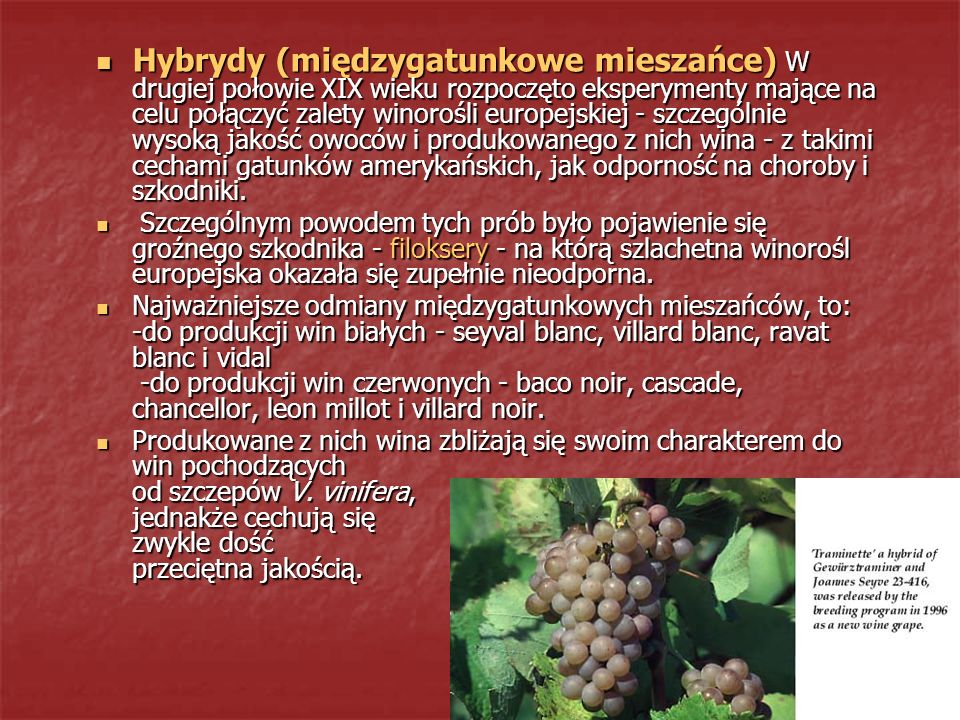 Hybrydy (międzygatunkowe mieszańce) W drugiej połowie XIX wieku rozpoczęto eksperymenty mające na celu połączyć zalety winorośli europejskiej - szczególnie wysoką jakość owoców i produkowanego z nich wina - z takimi cechami gatunków amerykańskich, jak odporność na choroby i szkodniki.