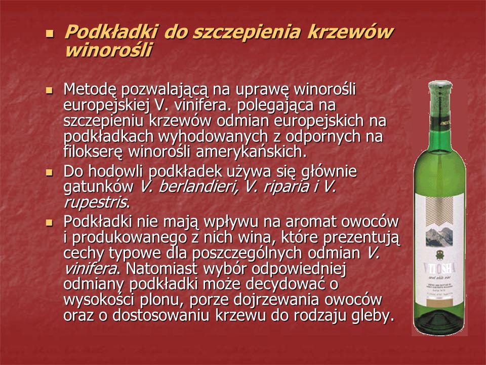 Podkładki do szczepienia krzewów winorośli