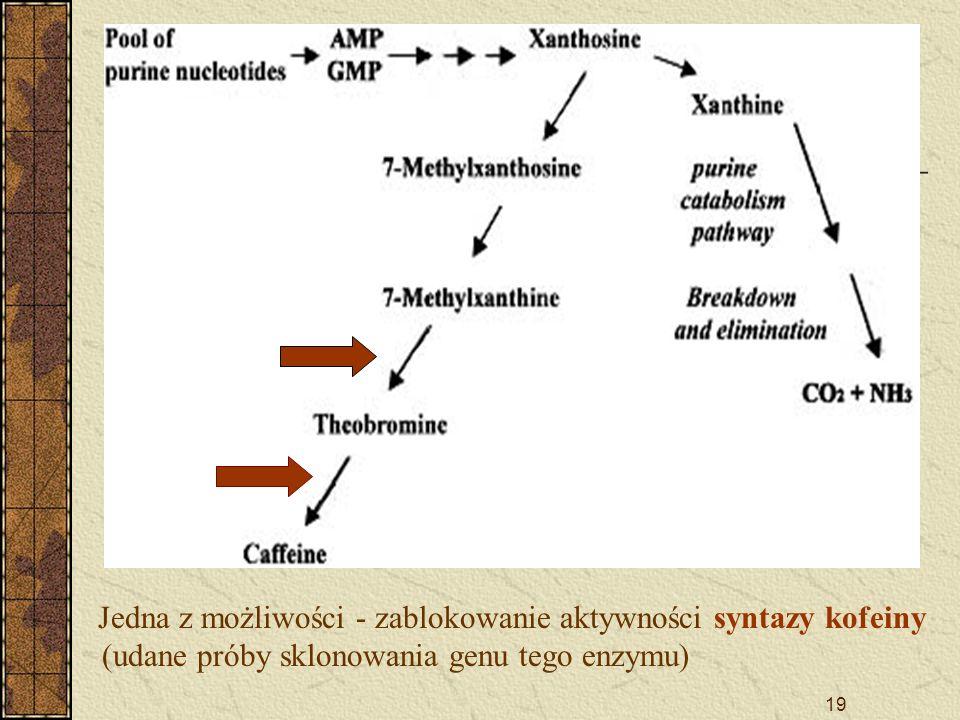 D Jedna z możliwości - zablokowanie aktywności syntazy kofeiny (udane próby sklonowania genu tego enzymu)