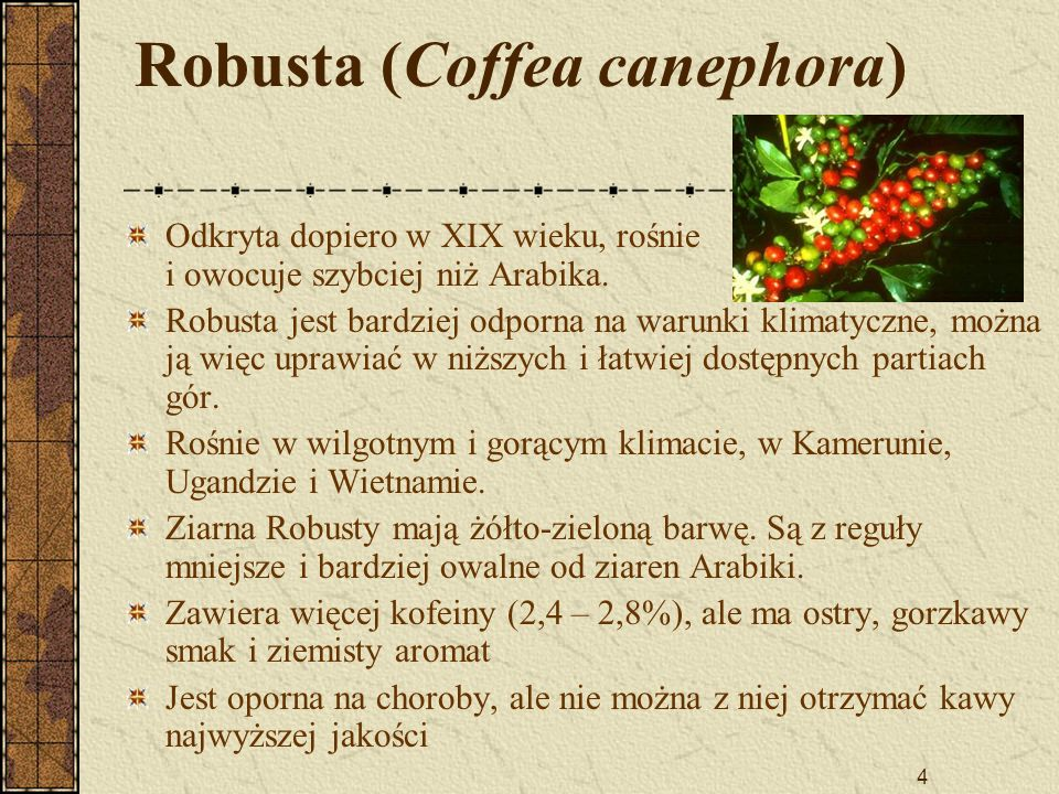 Robusta (Coffea canephora)