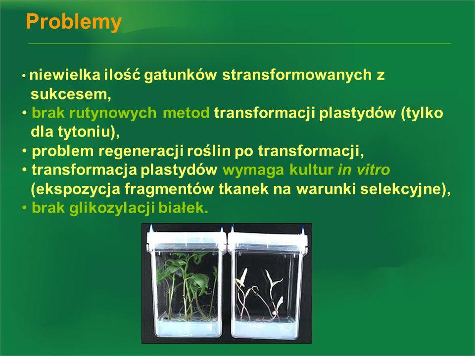 Problemy niewielka ilość gatunków stransformowanych z. sukcesem, brak rutynowych metod transformacji plastydów (tylko.