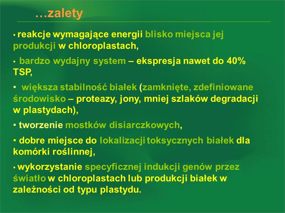 …zalety reakcje wymagające energii blisko miejsca jej produkcji w chloroplastach, bardzo wydajny system – ekspresja nawet do 40% TSP,