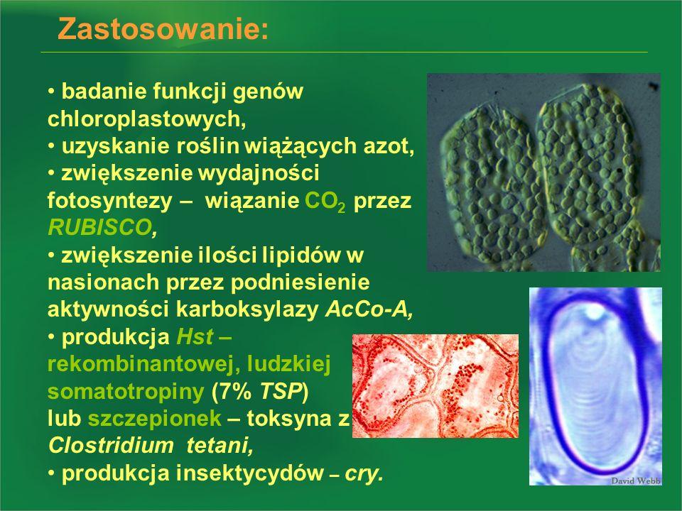 Zastosowanie: badanie funkcji genów chloroplastowych,