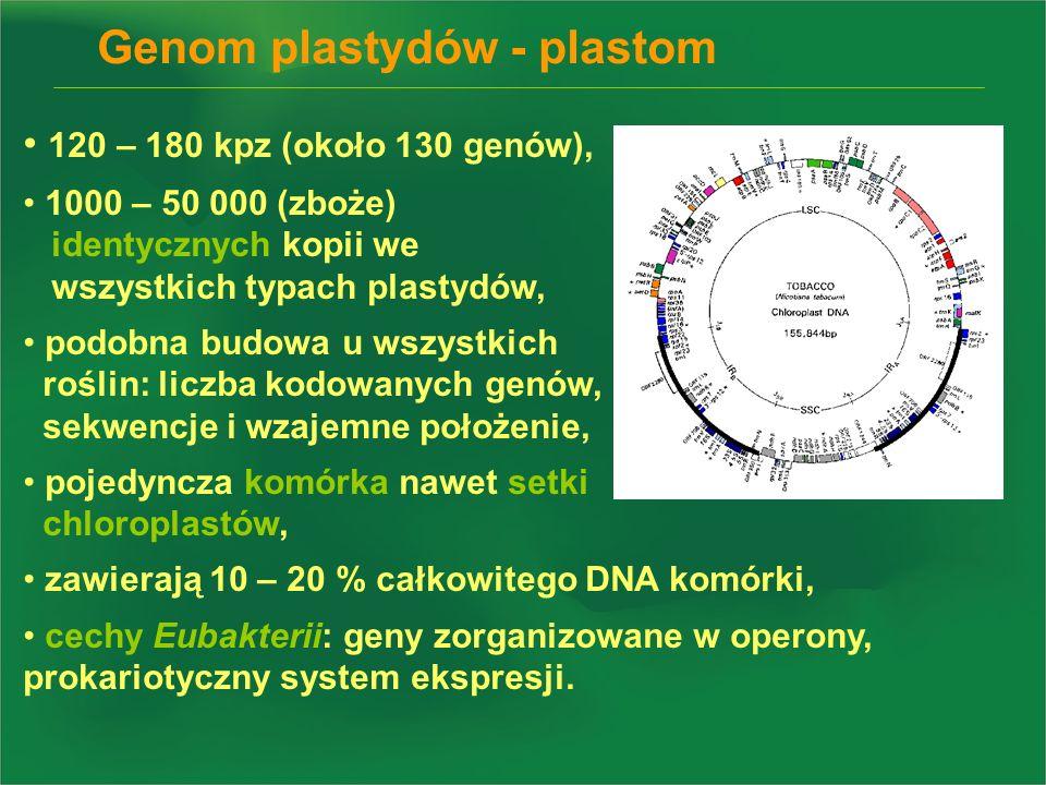 Genom plastydów - plastom