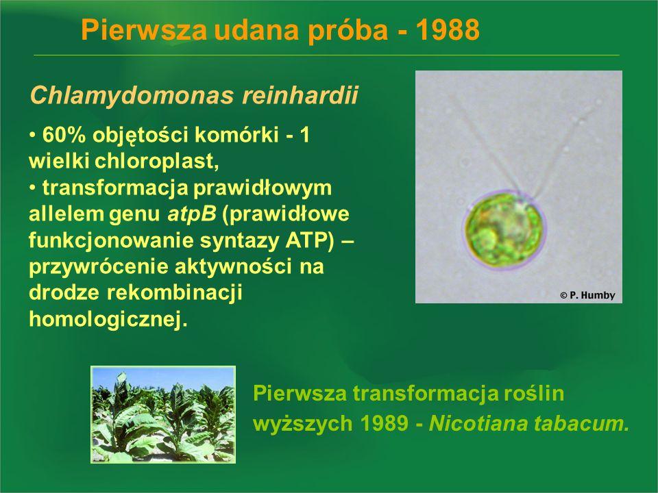 Pierwsza udana próba - 1988 Chlamydomonas reinhardii