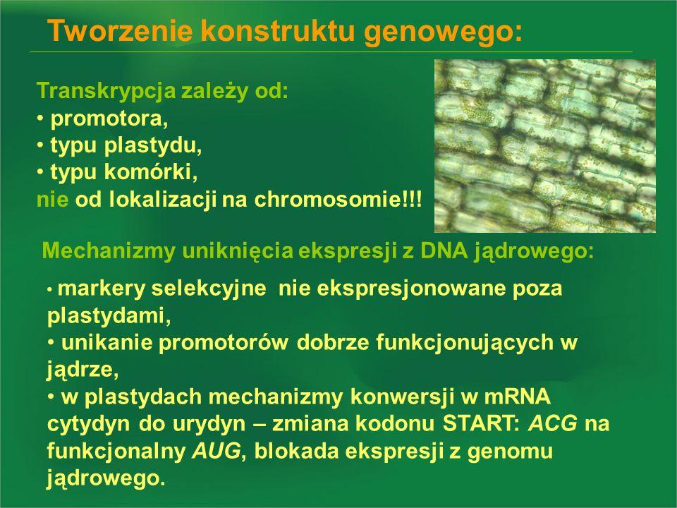 Tworzenie konstruktu genowego: