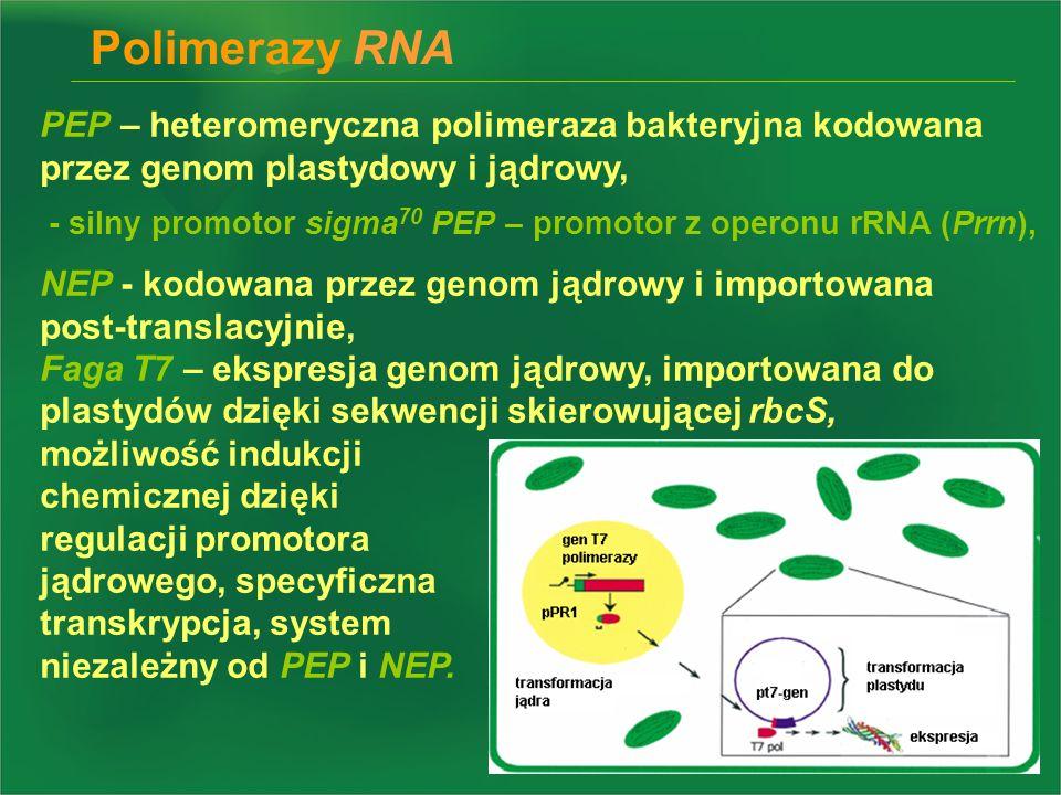 Polimerazy RNA PEP – heteromeryczna polimeraza bakteryjna kodowana przez genom plastydowy i jądrowy,