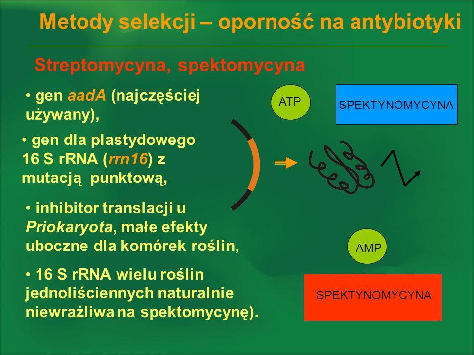 Streptomycyna, spektomycyna