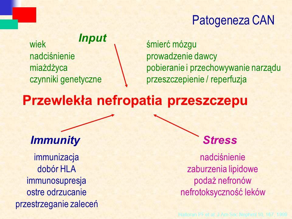 Przewlekła nefropatia przeszczepu