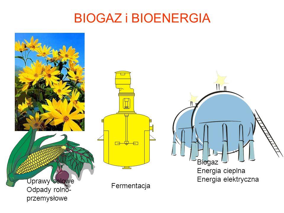 BIOGAZ i BIOENERGIA Biogaz Energia cieplna Energia elektryczna