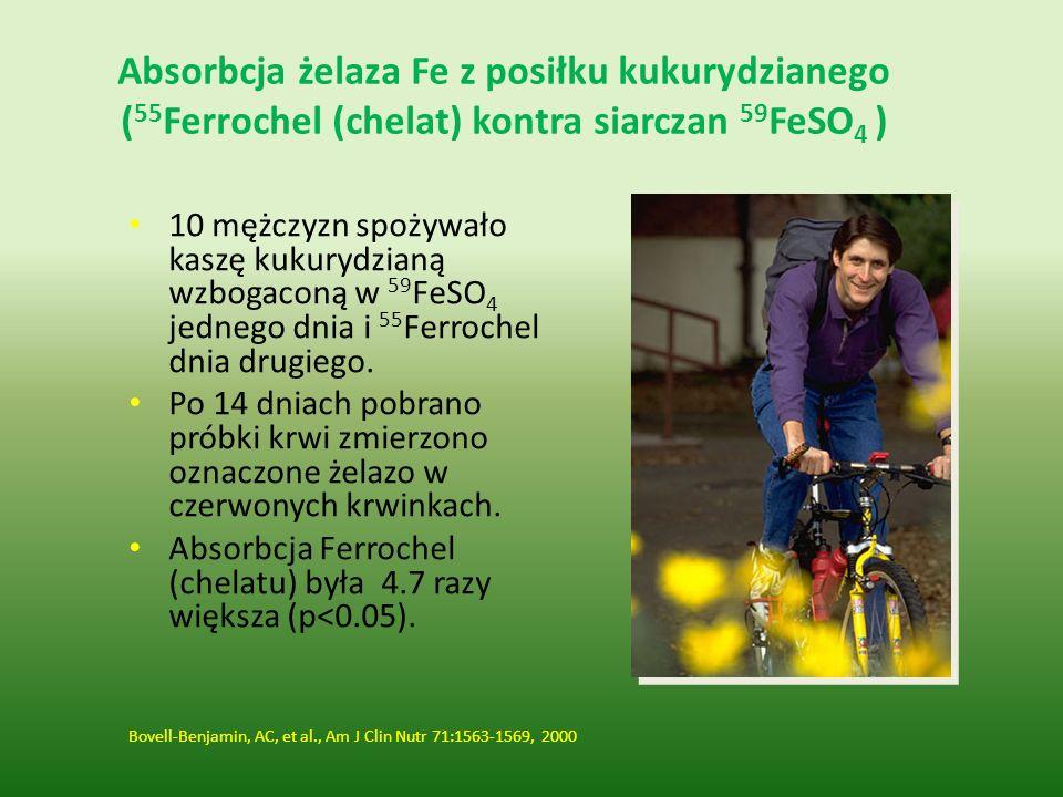 Absorbcja żelaza Fe z posiłku kukurydzianego (55Ferrochel (chelat) kontra siarczan 59FeSO4 )