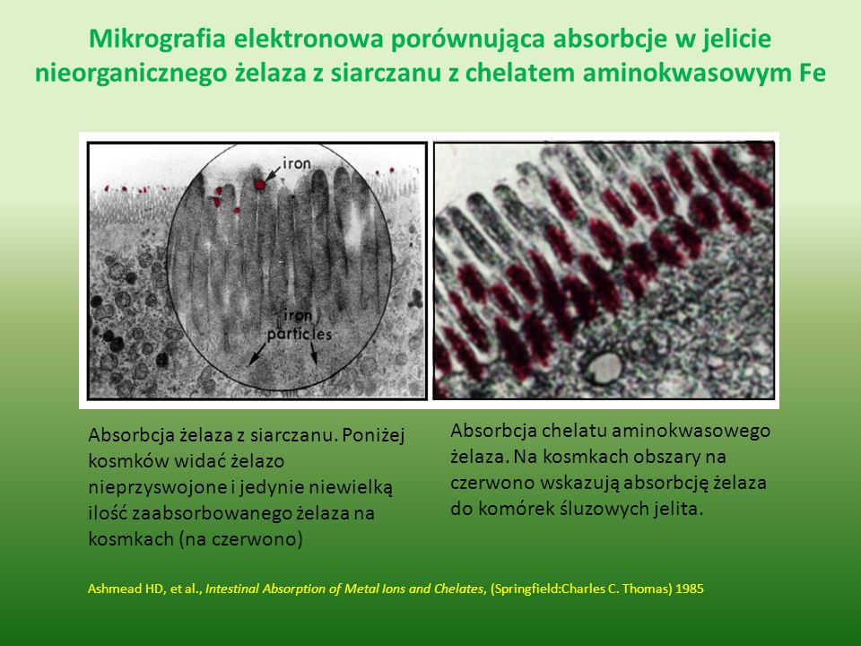 Mikrografia elektronowa porównująca absorbcje w jelicie nieorganicznego żelaza z siarczanu z chelatem aminokwasowym Fe