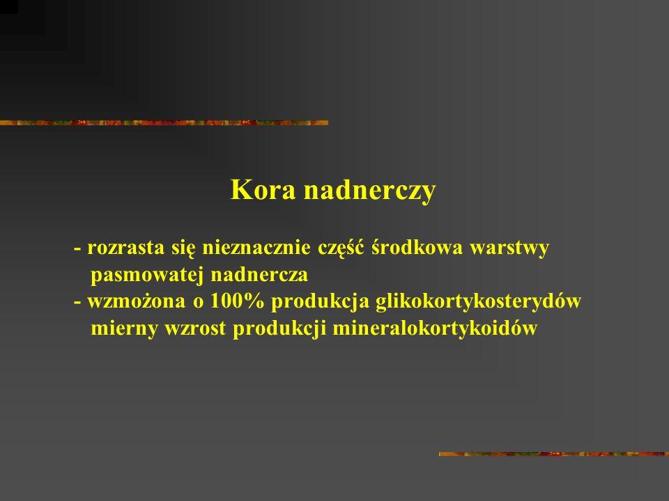 Kora nadnerczy - rozrasta się nieznacznie część środkowa warstwy pasmowatej nadnercza - wzmożona o 100% produkcja glikokortykosterydów mierny wzrost produkcji mineralokortykoidów