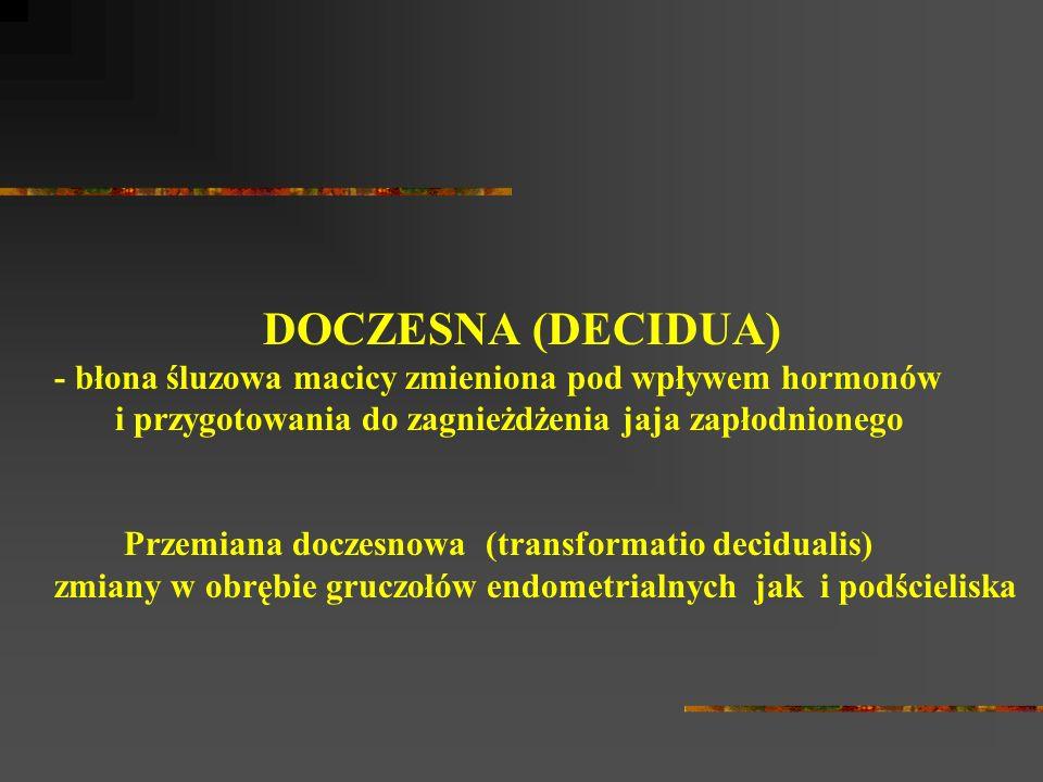 DOCZESNA (DECIDUA) - błona śluzowa macicy zmieniona pod wpływem hormonów i przygotowania do zagnieżdżenia jaja zapłodnionego Przemiana doczesnowa (transformatio decidualis) zmiany w obrębie gruczołów endometrialnych jak i podścieliska
