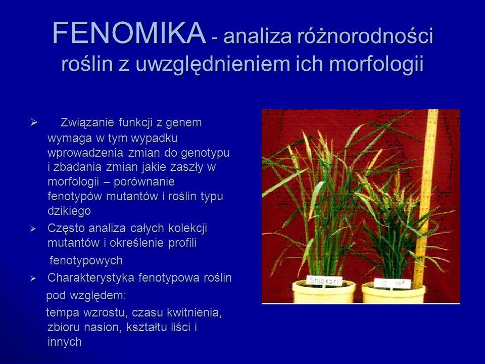 FENOMIKA - analiza różnorodności roślin z uwzględnieniem ich morfologii