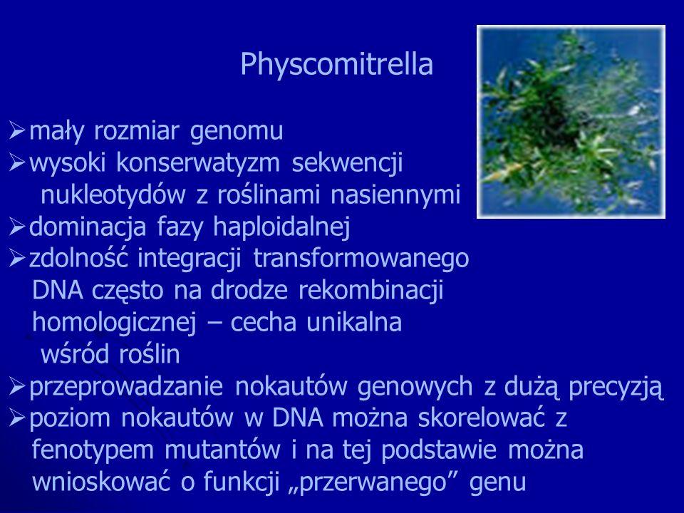 Physcomitrella mały rozmiar genomu. wysoki konserwatyzm sekwencji. nukleotydów z roślinami nasiennymi.