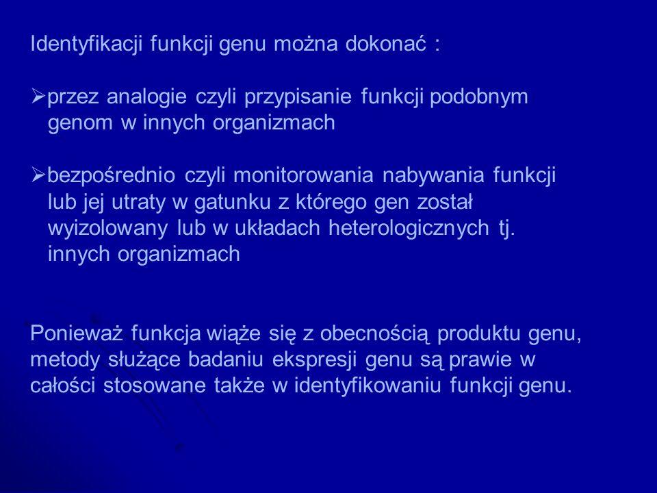 Identyfikacji funkcji genu można dokonać :