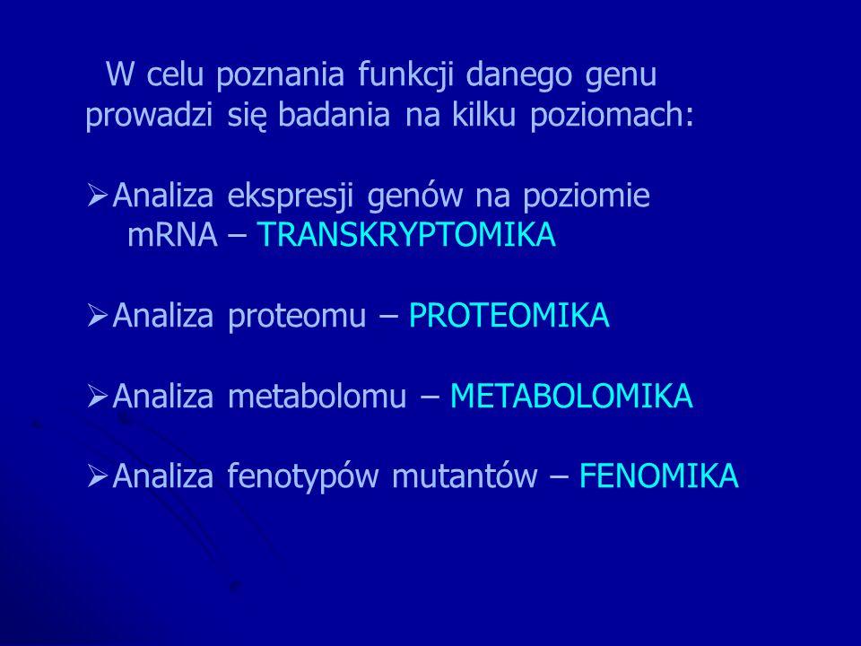 W celu poznania funkcji danego genu
