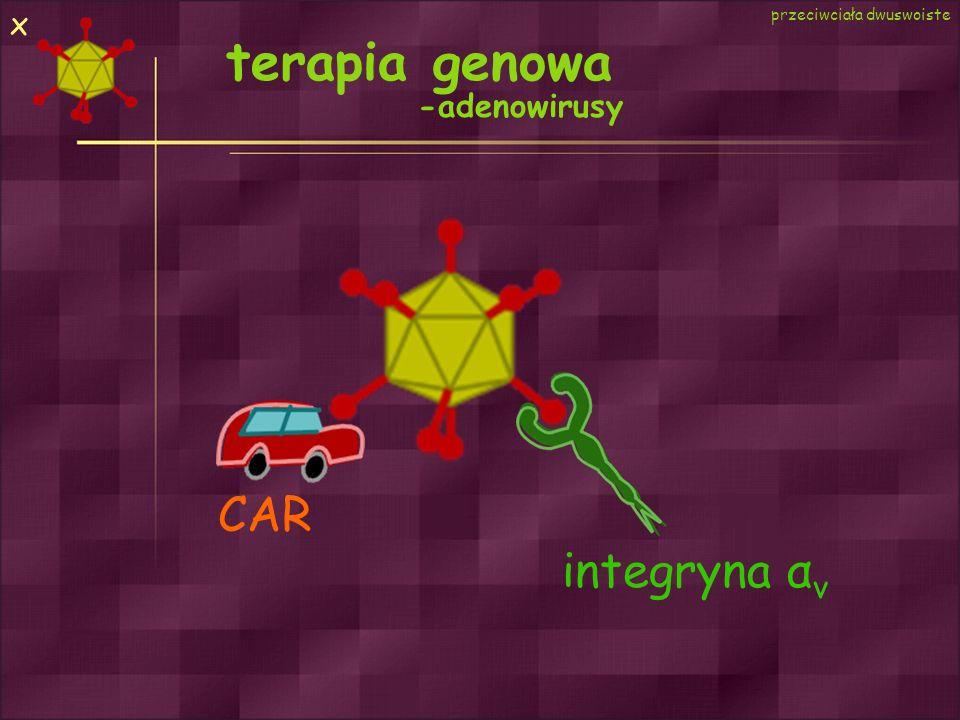 x przeciwciała dwuswoiste terapia genowa -adenowirusy CAR integryna αv