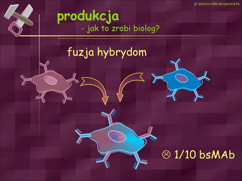 produkcja fuzja hybrydom  1/10 bsMAb - jak to zrobi biolog
