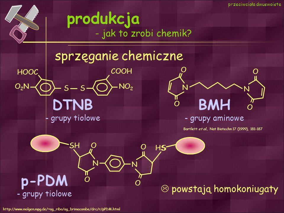 produkcja DTNB BMH p-PDM sprzęganie chemiczne - jak to zrobi chemik