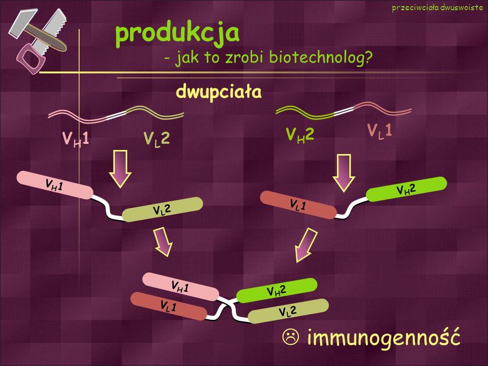 produkcja  immunogenność dwupciała - jak to zrobi biotechnolog VL1