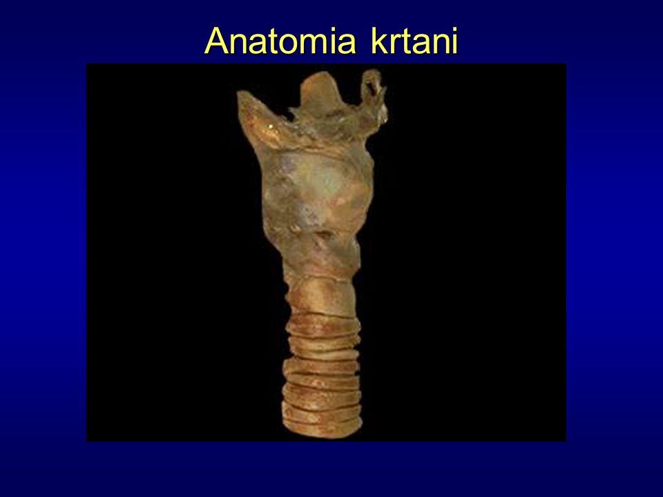Anatomia krtani