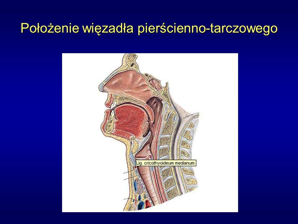 Położenie więzadła pierścienno-tarczowego
