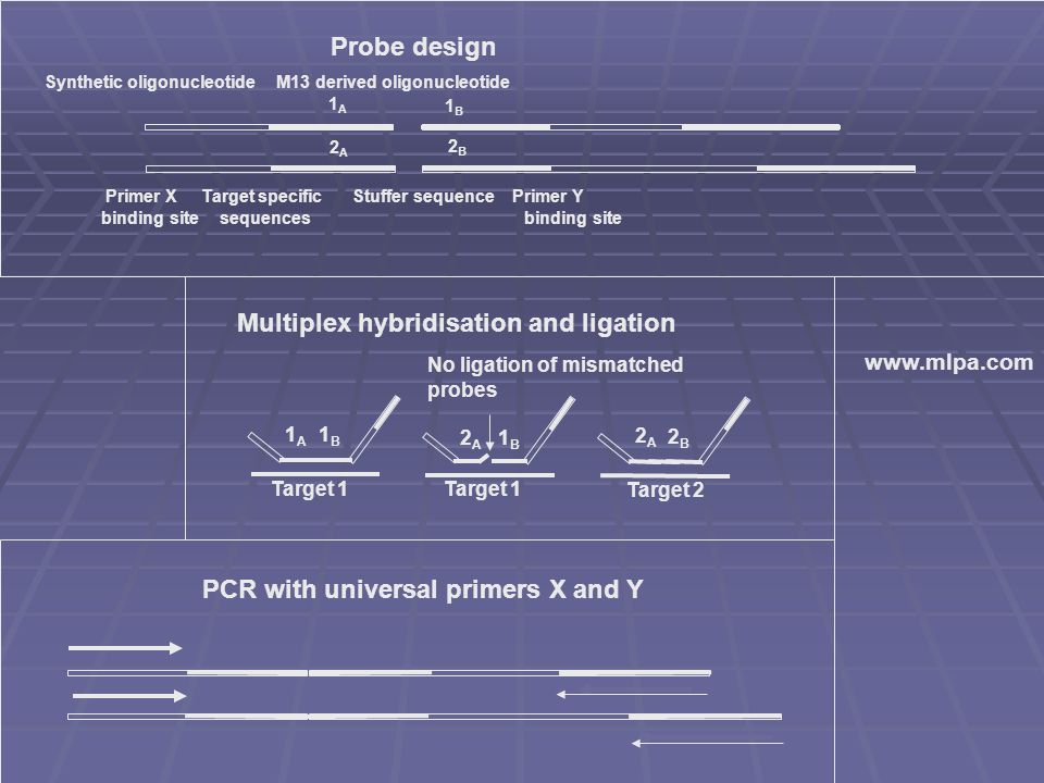 PCR with universal primers X and Y