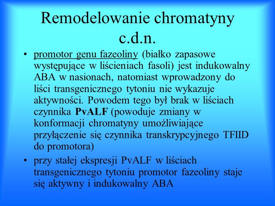 Remodelowanie chromatyny c.d.n.