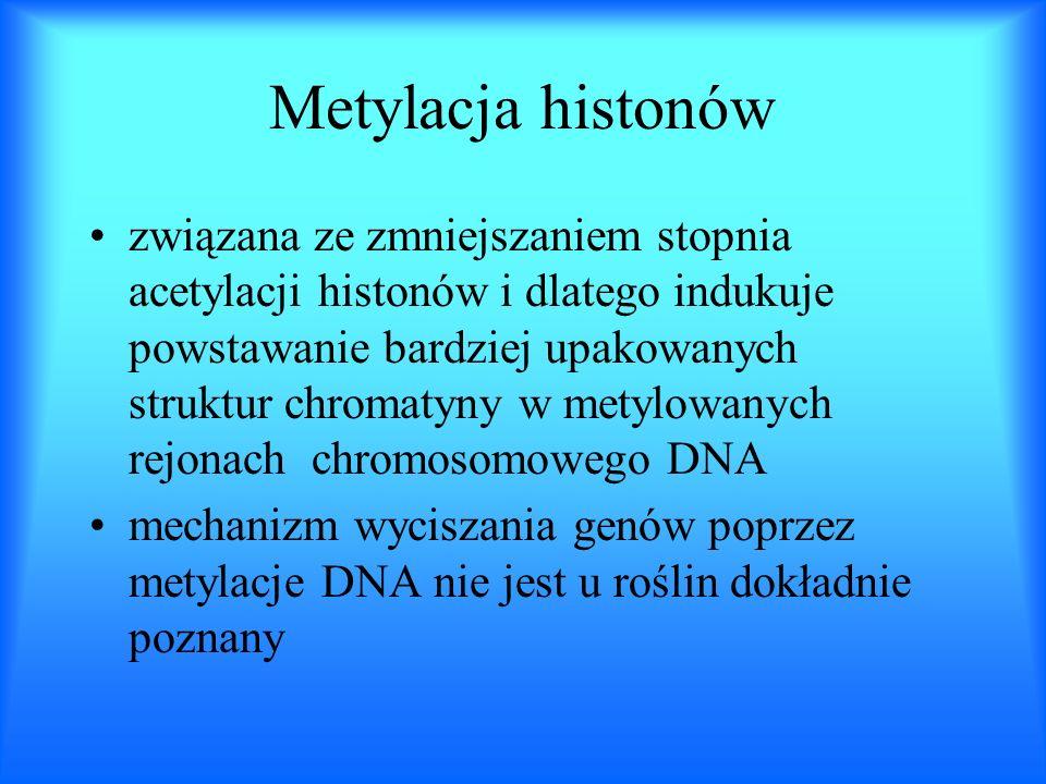 Metylacja histonów