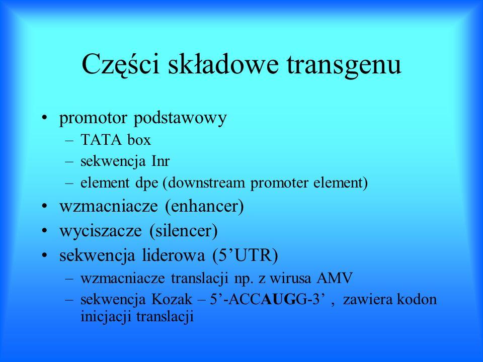 Części składowe transgenu