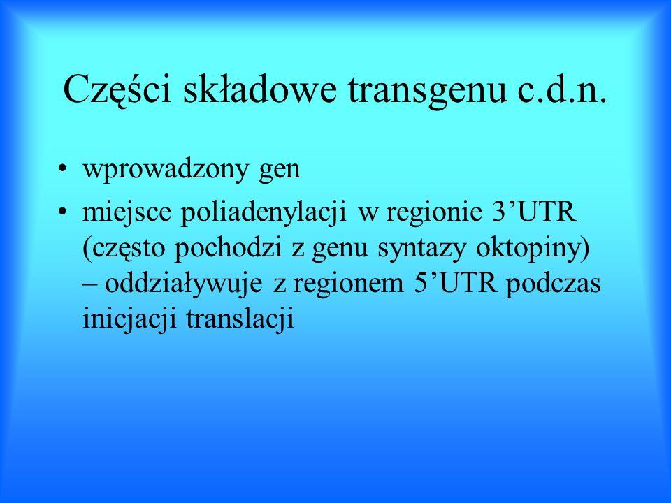 Części składowe transgenu c.d.n.