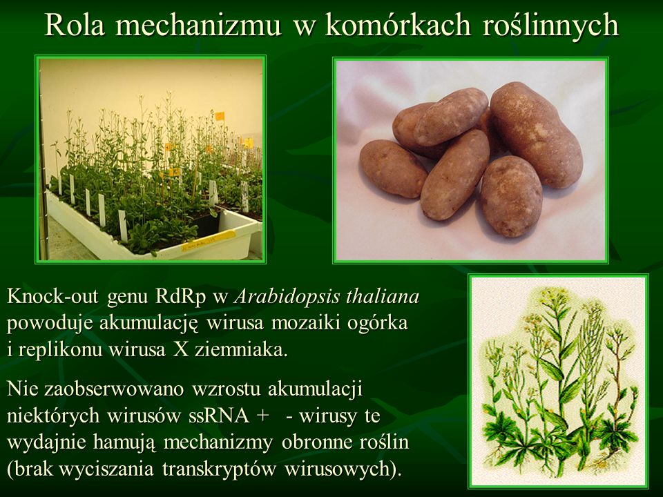 Rola mechanizmu w komórkach roślinnych