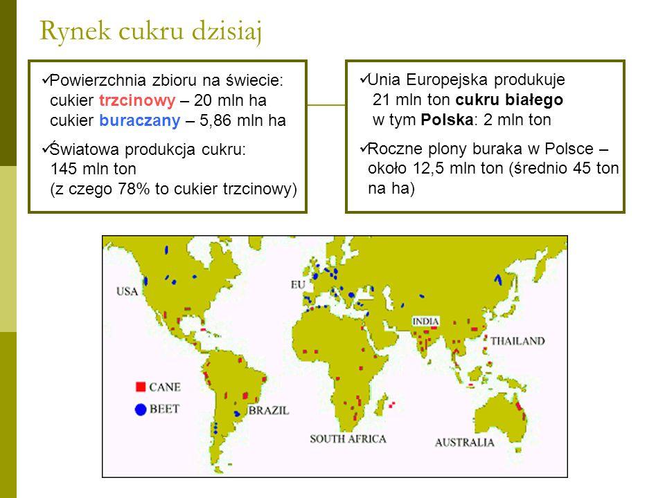 Rynek cukru dzisiaj Powierzchnia zbioru na świecie: cukier trzcinowy – 20 mln ha. cukier buraczany – 5,86 mln ha.