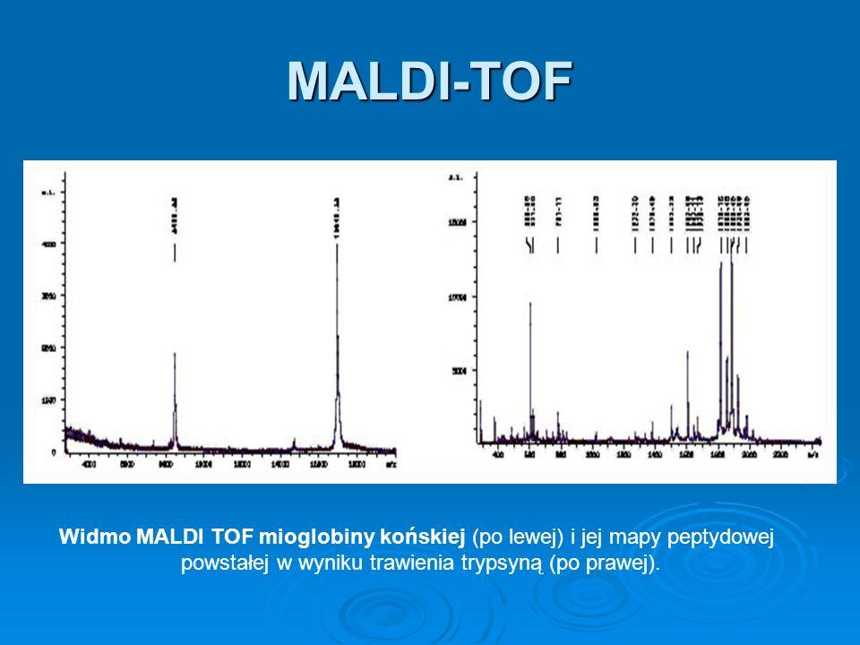 MALDI-TOF Widmo MALDI TOF mioglobiny końskiej (po lewej) i jej mapy peptydowej.